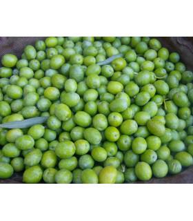 Frische Oliven BIO Manzanilla 10 Kg